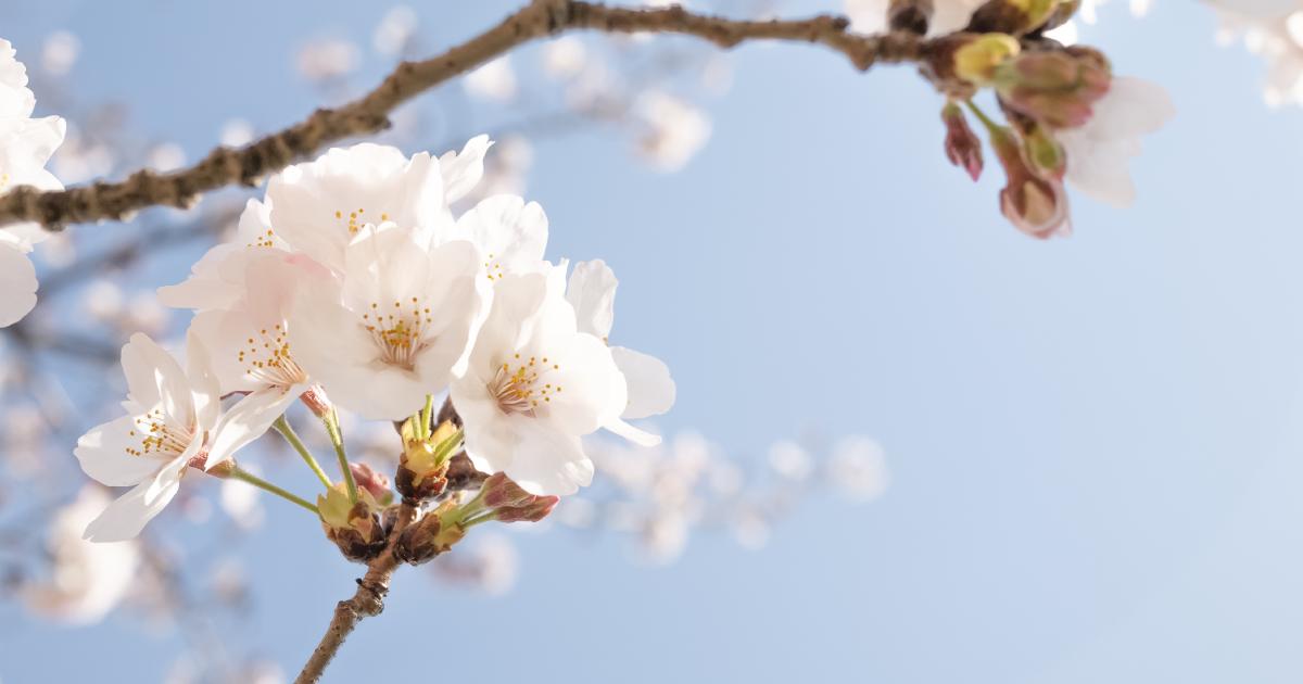 この春からはじめる、体質改善。 来年の花粉症を和らげるためにできること。